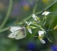 Blühwiese der Naturheilpraxis Tapken_6